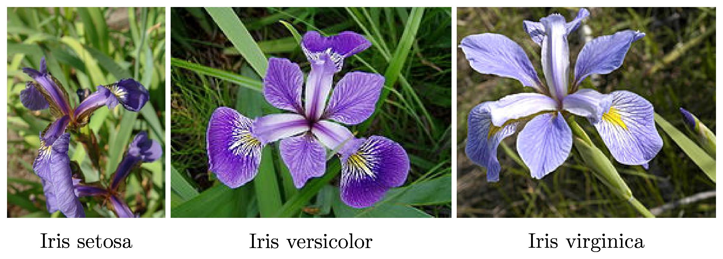 Iris flower data set image collections flower wallpaper hd iris flower dataset images flower wallpaper hd iris flower dataset gallery flower wallpaper hd machine learning izmirmasajfo